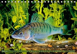 Von Aal bis Zander: Fische in europäischen Gewässern (Tischkalen