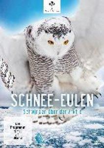 Schnee-Eulen-Schwingen Über Der Aktis