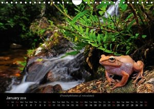 Frogs / UK-Version (Wall Calendar 2016 DIN A4 Landscape)