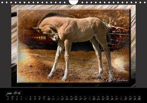 Equus caballus (Calendrier mural 2016 DIN A4 horizontal)