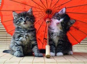 Kätzchen unterm Schirm. Puzzle 500 Teile