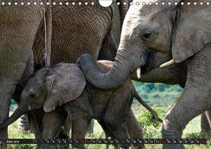 Wildes Südafrika (Wandkalender 2019 DIN A4 quer)