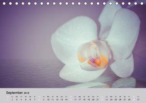 Orchideen Träume