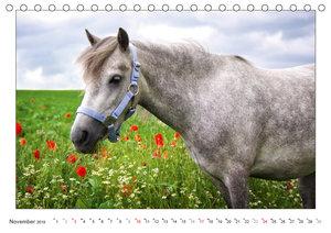 Der Pferdekalender (Tischkalender 2019 DIN A5 quer)
