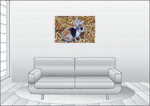 Premium Textil-Leinwand 90 cm x 60 cm quer Dreifarbiges Kaninche