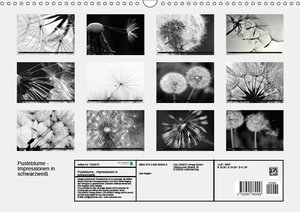 Pusteblume - Impressionen in schwarzweiß