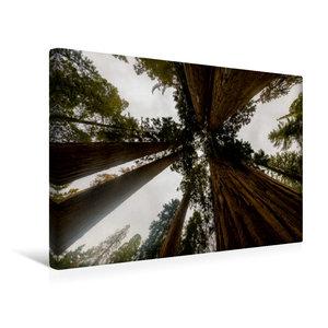 Premium Textil-Leinwand 45 cm x 30 cm quer Sequoia Nationalpark,