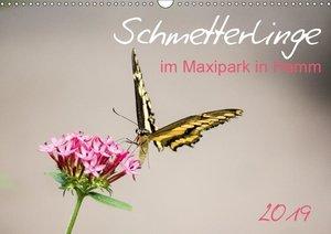 Schmetterlinge im Maxipark in Hamm (Wandkalender 2019 DIN A3 que