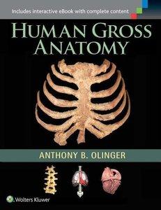 Human Gross Anatomy