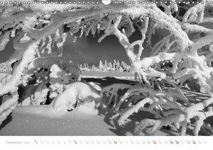 Mystischer Schwarzwald (Wandkalender 2019 DIN A3 quer)