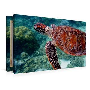 Premium Textil-Leinwand 90 cm x 60 cm quer Grüne Meeresschildkrö