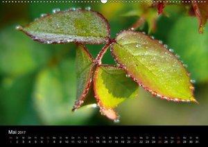 Laub und Blätter 2017