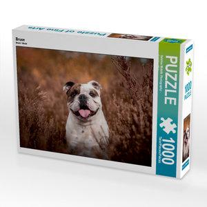 CALVENDO Puzzle Bruce 1000 Teile Lege-Größe 64 x 48 cm Foto-Puzz