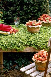 Premium Textil-Leinwand 60 cm x 90 cm hoch Erdbeerzeit