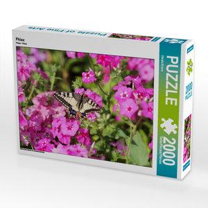 CALVENDO Puzzle Phlox 2000 Teile Lege-Größe 90 x 67 cm Foto-Puzz