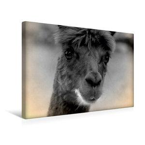 Premium Textil-Leinwand 45 cm x 30 cm quer Alpaka