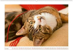 Katzen: in die Augen geschaut
