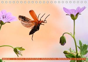 Sechs Beine in der Luft - Käfer im Flug (Tischkalender 2020 DIN