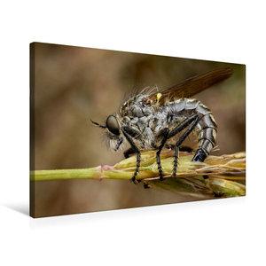 Premium Textil-Leinwand 75 cm x 50 cm quer Barbarossa-Fliege (Eu