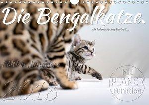 Die Bengalkatze. Edition Jungtiere