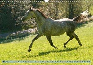Lustiger Schimmel - ein Pferd mit Humor