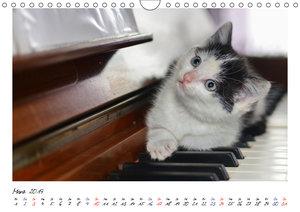 Die Launen der Katzen 2019 (Wandkalender 2019 DIN A4 quer)