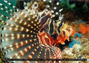Tropische Unterwasserwelt
