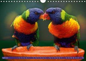 Vögel in Turtellaune
