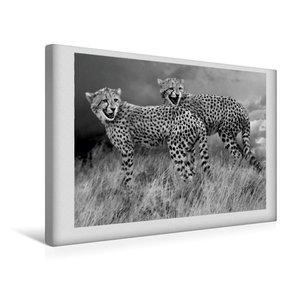 Premium Textil-Leinwand 45 cm x 30 cm quer Junge Gepardengeschwi