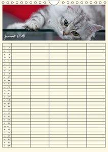 Zauberhafte Katzen - Familienplaner