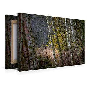 Premium Textil-Leinwand 45 cm x 30 cm quer Pennigbüttler Moor -