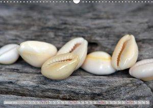 Häuser der Meere: Muscheln - Seeigel - Schnecken