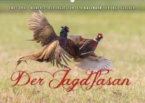 Emotionale Momente: Der Jagdfasan.