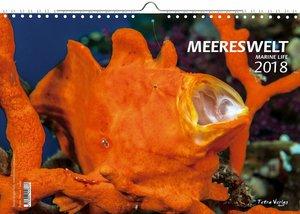 Kalender Meereswelt Marine Life 2018