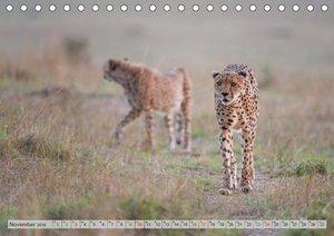 Emotionale Momente: Geparden / CH-Version (Tischkalender 2019 DI