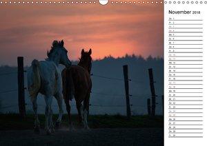 Pferde im schönen Taunus