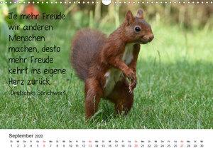 Der literarische Eichhörnchen-Kalender (Wandkalender 2020 DIN A3