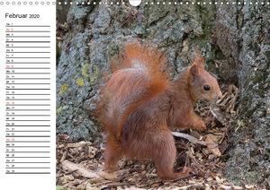 Guck mal, ein Eichhörnchen! (Wandkalender 2020 DIN A3 quer)