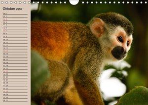 Affen - Individuen mit Charakter und Seele
