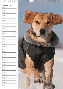 Lustiges Hundeleben - Azawakh Ridgeback Porträts