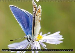 Schmetterlinge ganz nah