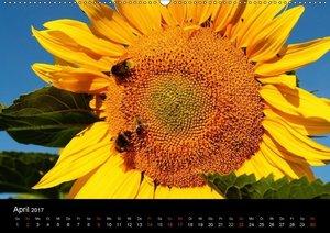 Sonnenblumen (CH-Version)