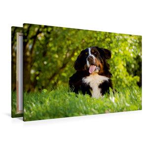 Premium Textil-Leinwand 120 cm x 80 cm quer Berner Sennenhund