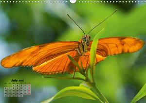 Fragile Beauties - Exotic butterflies (Wall Calendar 2020 DIN A3