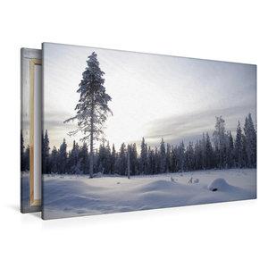 Premium Textil-Leinwand 120 cm x 80 cm quer Nadelwald im verschn