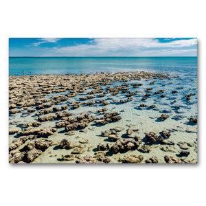 Premium Textil-Leinwand 90 cm x 60 cm quer Stromatolithen