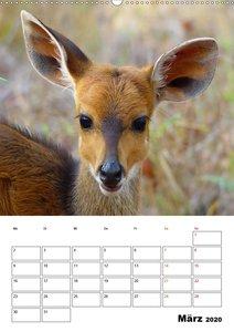 Fazinierende Tier-Selfies aus Afrika (Wandkalender 2020 DIN A2 h