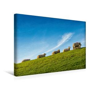 Premium Textil-Leinwand 45 cm x 30 cm quer Schafe auf dem Deich