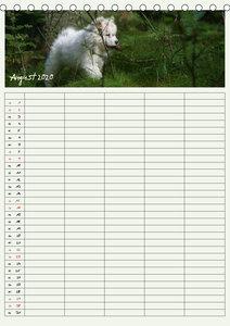 Kleine Samojeden (Tischkalender 2020 DIN A5 hoch)