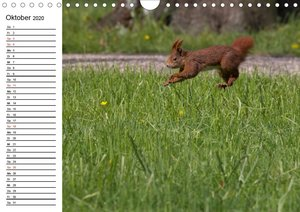 Mit dem Eichhörnchen durchs Jahr